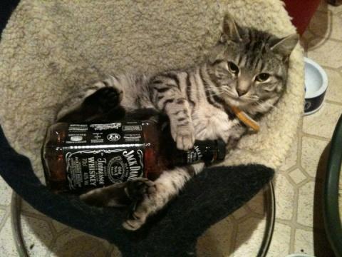 DrunkCAt